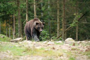 原則6 野生動物の尊重